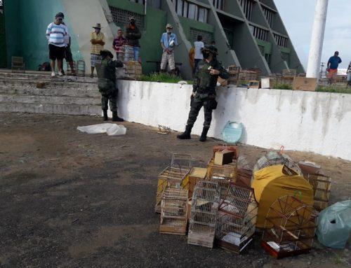 Polícia Militar apreende 55 pássaros silvestres comercializados ilegalmente em feira livre de Lagarto