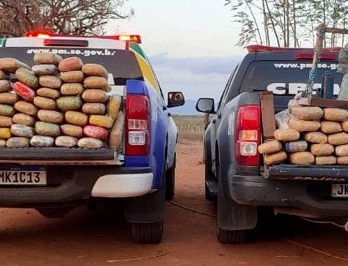 Polícia Militar apreende mais de 142 kg de maconha no Alto Sertão sergipano